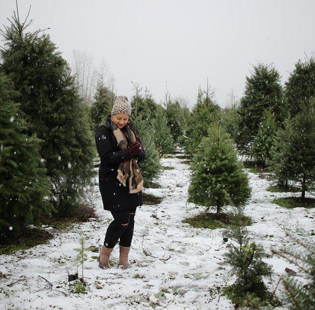 Snowy visit to the Christmas Tree Farm